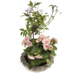 Pretty pink plantenmix
