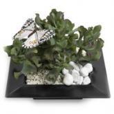 Trendy vetplantentuinmix met vlinders