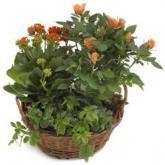 Oranje plantenmix