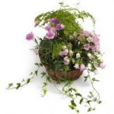 Roze plantenmix